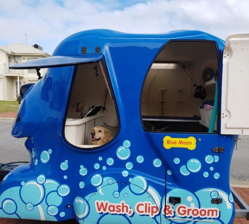 Blue Wheelers mobile grooming salon, blue dog, big blue dog, blue dog trailer, dog grooming salon, blue wheeler salon, lab in a grooming trailer, Labrador in a mobile salon