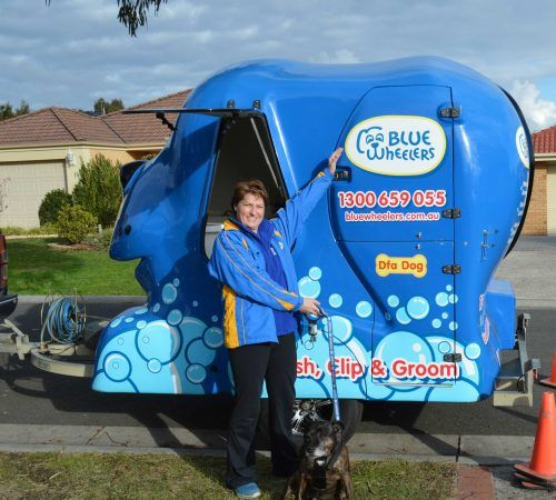dog grooming uniform, grooming salon, mobile grooming salon, blue dog, dog trailer, mobile dog grooming salon, female groomer, dog groomer, mobile dog groomer, mobile dog wash trailer, Blue Wheelers mobile dog wash trailer, Blue Wheelers mobile dog grooming trailer, big blue dog