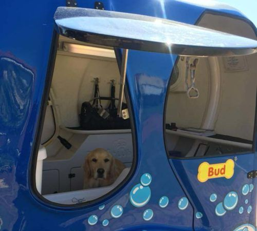 Blue Wheelers mobile grooming salon, blue dog, big blue dog, blue dog trailer, dog grooming salon, blue wheeler salon, GSD, german shepard
