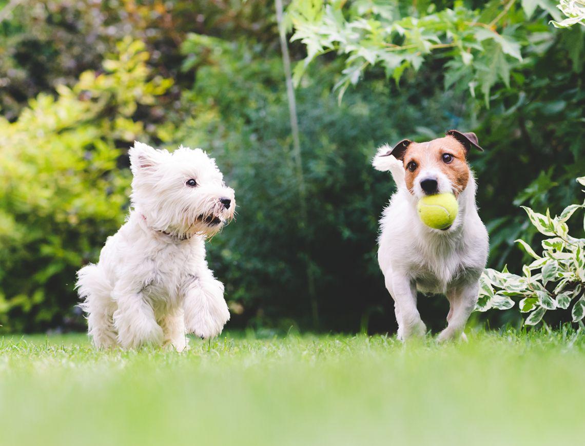 Fully Fenced Dog Parks Melbourne