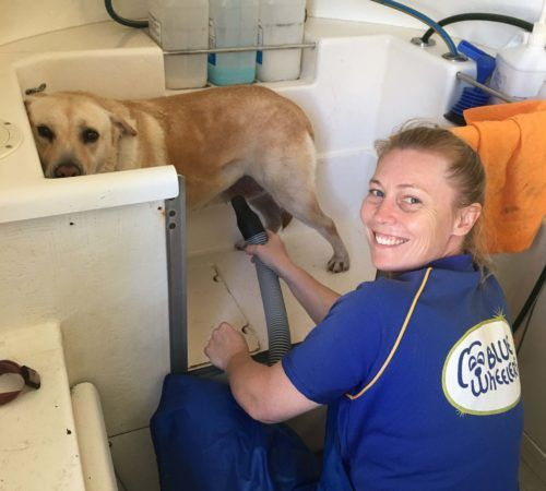 Mobile dog groomer professional dog wash nambour dog grooming uniform grooming salon mobile grooming salon blue dog dog solutioingenieria Gallery