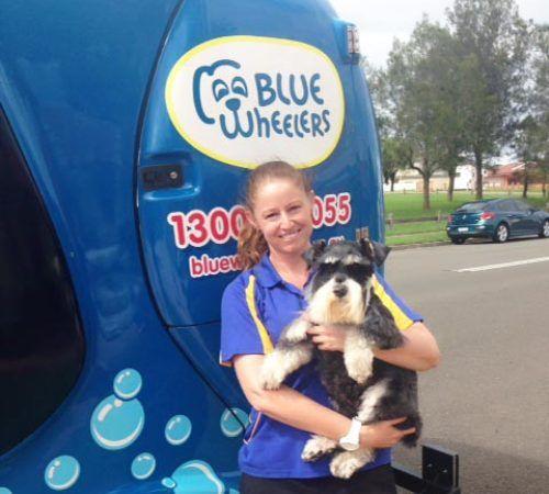 Mobile dog groomer professional dog wash shellharbour lady holding dog cute dog woman holding dog blue wheelers logo dog solutioingenieria Choice Image