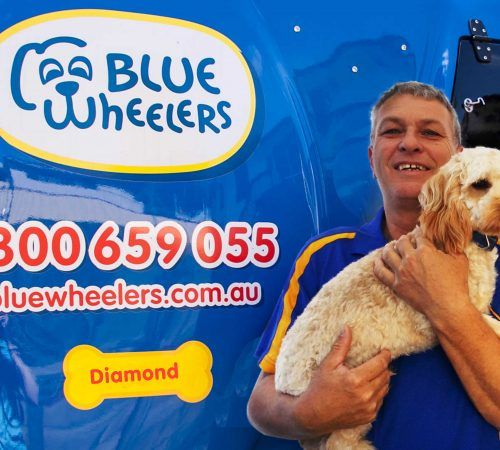 groomer holding dog, cute dog, man holding dog, blue wheelers logo, dog grooming uniform, grooming salon, mobile grooming salon, blue dog, dog trailer, mobile dog grooming salon, male groomer, male dog groomer, dog groomer, cute dogs, mobile dog wash trailer, grooming a dog, groomer