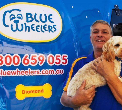 groomer holding dog, cute dog, man holding dog, blue wheelers logo, dog grooming uniform, grooming salon, mobile grooming salon, blue dog, dog trailer, mobile dog grooming salon, male groomer, male dog groomer, dog groomer, cute dogs, mobile dog wash trailer, grooming a dog, groomer