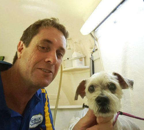 dog, cute dog, dog in a grooming trailer, dog inside of mobile salon, doggies, dog wash