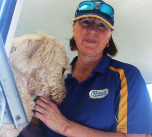 Lady holding dog, cute dog, woman holding dog, Bichon Frise, groomer petting a Bichon Frise,, cute Bichon Frise,