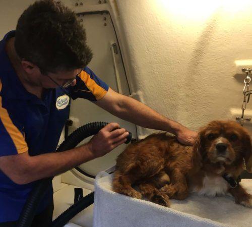 dog, cute dog, dog in a grooming trailer, dog inside of mobile salon, doggies, dog wash, dog getting groomed, dog groomer, male dog groomer, mobile dog groomer,