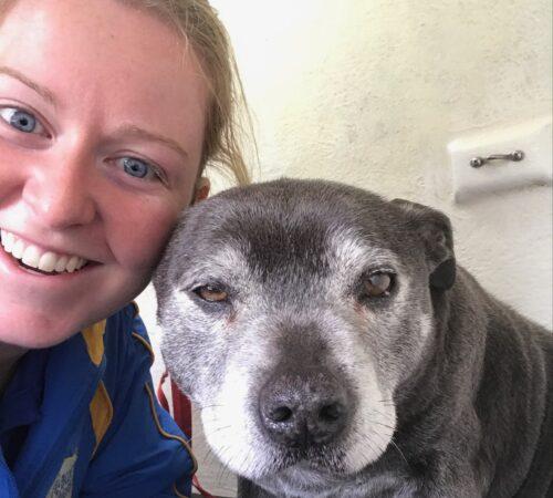 Portarlington dog groomer