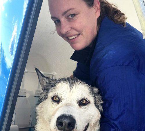 mobile dog groomer washing a husky, dog groomer, husky being washed, husky, dog after wash, cute husky, happy husky