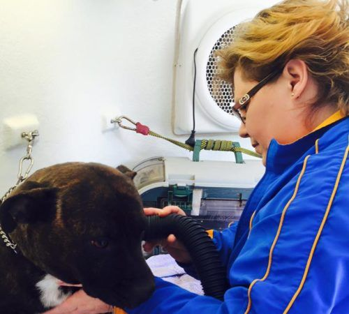Mobile Dog Grooming Penrith Area