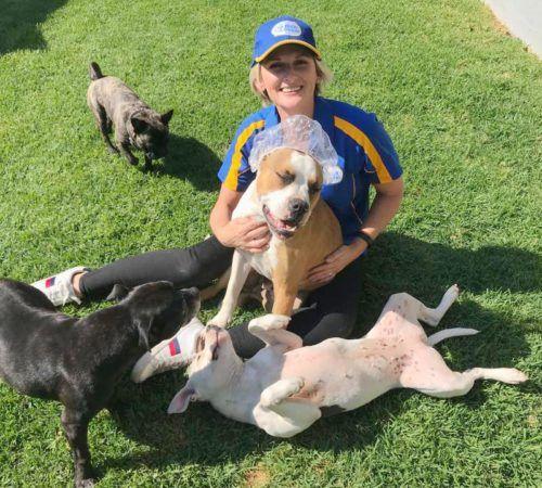 mobile dog groomer, blue wheelers, cute dog,