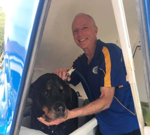 mobile dog grooing WA, mobile dog groomer, mobile dog grooming east victoria park, dogs, blue wheelers, big blue dog