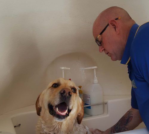 Mobile Dog Grooming Adelaide