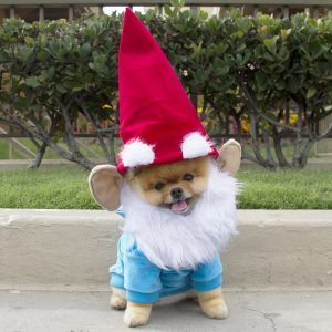 halloween-costumes-for-your-dogs-gnome