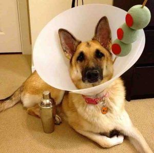 halloween-costumes-for-your-dogs-martini