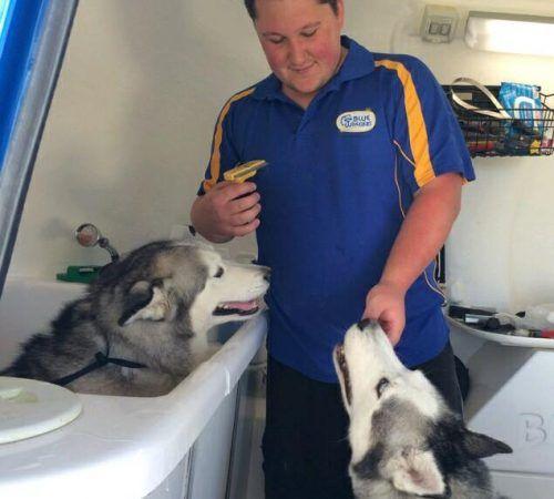 dog grooming uniform, grooming salon, mobile grooming salon, blue dog, dog trailer, mobile dog grooming salon, male groomer, dog groomer, mobile dog groomer, mobile dog wash trailer, dogs, grooming a dog, husky, cute huskies, huskies groom, groom huskies, adorable huskies