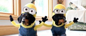 minion-halloween-costumes-for-your-dogs