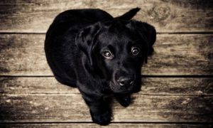 dog-training-advice-series-teaching-your-dog-to-sit