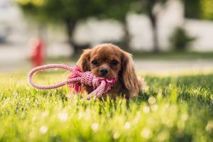 Best dog parks and beaches in Perth