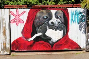 street art, artist, graffiti, graffiti, cute graffiti, dog graffiti, Melbourne, Melbourne street art, dog street art, cute dog, dog art, street art in Melbourne, visit Melbourne, street art graffiti, Fitzroy Street, Fitzroy street art, Fitzroy street art, Fitzroy street graffiti, Fitzroy graffiti .