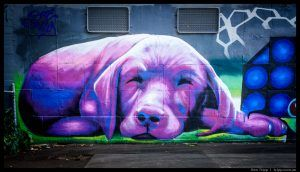 Windsor Street, Windsor Street graffiti, graffiti, cute graffiti, dog graffiti, Melbourne, Melbourne street art, dog street art, purple dog, cute dog, Labrador, cute Labrador, Labrador art, dog art, street art in Melbourne, visit Melbourne, street art graffiti