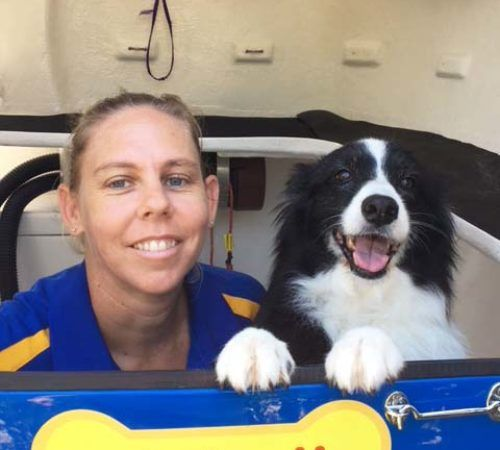 dog groomer with a dog, mobile dog groomer with a dog, cute dog, mobile dog groomer, dogs, dog, puppy, dog wash trailer, border collie