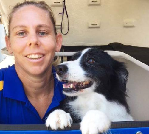 dog groomer with a dog, mobile dog groomer with a dog, cute dog, mobile dog groomer, dogs, dog, puppy, dog wash trailer, border collie