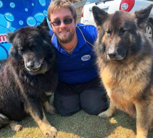 mobile dog groomer, blue wheelers, blue wheelers dog groomer, German Shepard, GSD