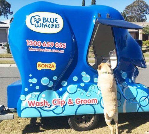 blue wheelers logo, dog grooming uniform, grooming salon, mobile grooming salon, blue dog, dog trailer, mobile dog grooming salon, dog asking for treats, cute dogs, mobile dog wash trailer, Blue Wheelers trailer