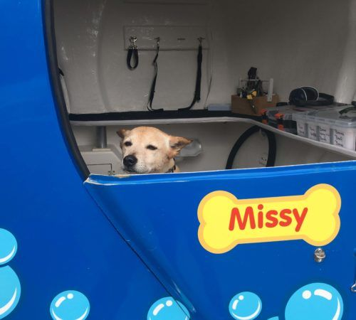 dog, cute dog, dog in a grooming trailer, dog inside of mobile salon, doggies, dog wash