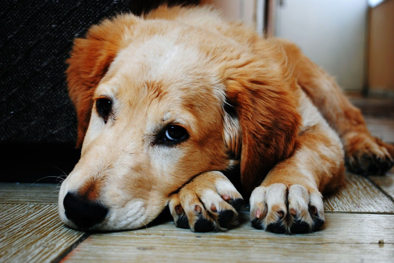 Loss of a Pet, Mourning the death of your furry best friend, loosing a dog, deal with a dog's death, how to deal with a dog dying, death of dog