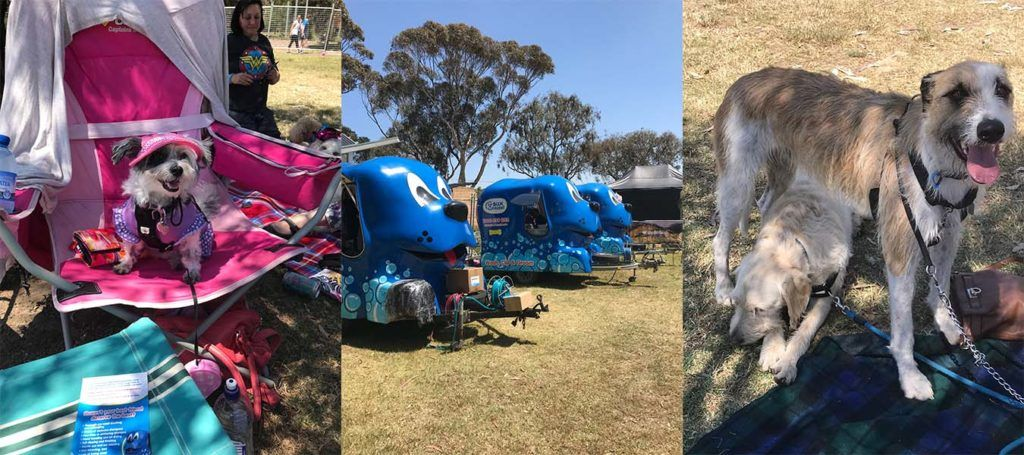 Oscar's Law , dogs, Dogapalooza , Blue Wheelers, love dogs, dog event, dog events melbourne,, charity, dog charity