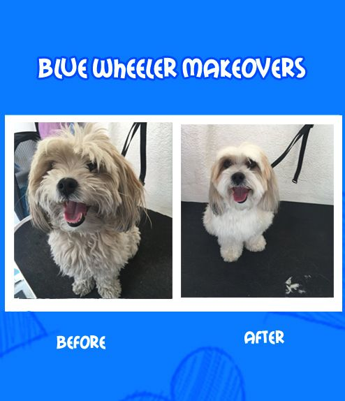 dog being washed, dog groomer, cute dog, happy dog, dog groom, Dogs getting groomed