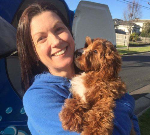 dog groomer parkdale, dog grooming parkdale, oodles, groodle, dog grooming, dogs, puppies, oodle puppies