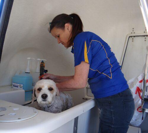 dog grooming edgewater