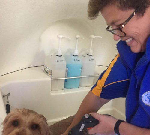 mobile dog grooming and dog washing Shepparton, mobile dog groomer, blue wheelers, cute dog, mobile dog grooming, Shepparton dog groomer, dogs, cute dogs, puppy wash, dog wash, dog groom