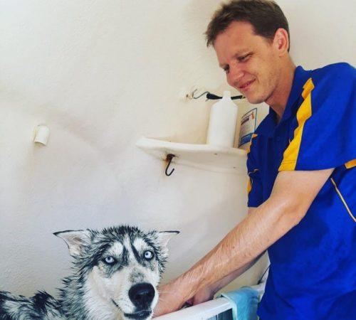 mobile dog grooming, dog groomers, dog grooming, blue wheelers, blue wheelers bundaberg west