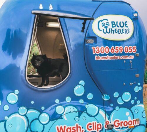 dog wash landsdale