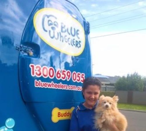 Lady posing with a dog, cute dog, woman posing with a dog, blue wheelers logo, dog grooming uniform, grooming salon, mobile grooming salon, blue dog, dog trailer, mobile dog grooming salon, female groomer, female dog groomer, lady dog groomer, cute dogs, mobile dog wash trailer, mobile dog groomer, cute dogs, dog, dogs, cute puppy, pup, Pomeranian, Pomeranians