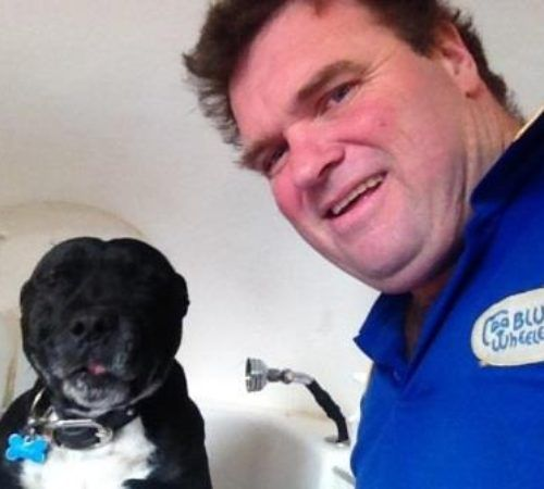 Dog groomer, dog in a bath, dog wash, groomer washing a dog, dog wash, cute dog, dogs, dog in a hydrobath,