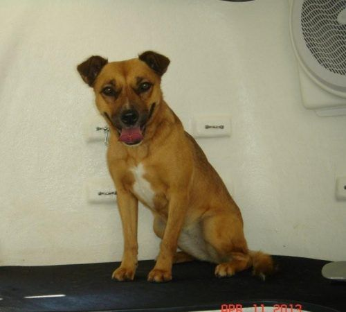 cute dog, dog, tan dogs, smiling dog, dog being groomed, dog in a grooming salon, happy dog, mobile dog grooming