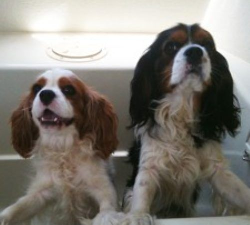 two dogs in a hydrobath, dogs in a tubm dogs in hydrobath, dogs being washed, dog groom, dog wash, cute dog