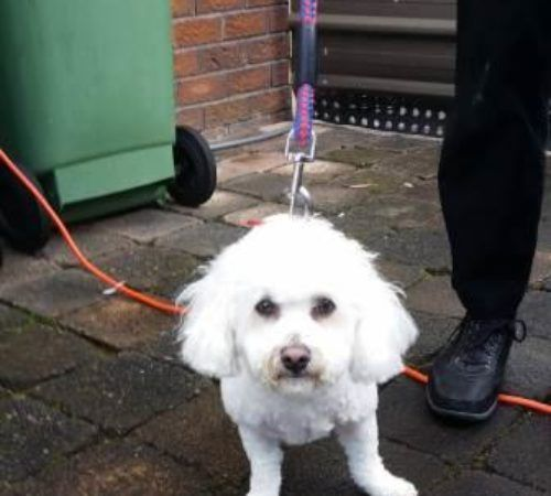 cute dog, cute white dog, dog, white dog, fluffy dog, happy dog