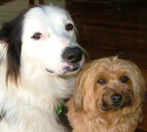 dog, cute dog, dogs