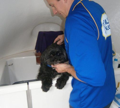 dog, cute dog, dog in a grooming trailer, dog inside of mobile salon, dog being groomed, dog grooming, dog being groomed by a mobile dog groomer, dog being washed by a mobile dog groomer, dog in a hydrobath
