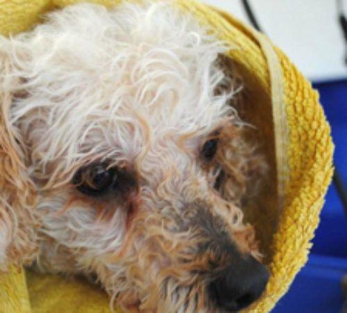 cute dog wrapped in a towel, dog bath, cute dog after bath, dog wrapped in a towel