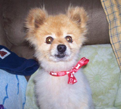 cute dog, dog, dogs, white dog, adorable dog, dog groom, smiling dog