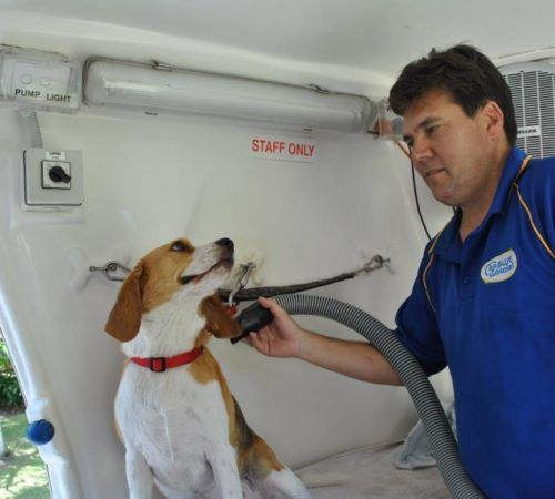grooming salon, mobile grooming salon, blue dog, dog trailer, mobile dog grooming salon, male groomer, female dog groomer, dog groomer, cute dogs, mobile dog wash trailer, mobile dog groomer, cute dogs, dog, dogs, cute puppy, pup, groomer grooming dog, dog in a hydrobath, groomer washing a dog