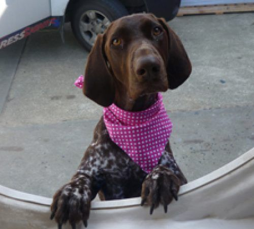 dog peeping through the grooming salon window, dog, dogs, cute dog
