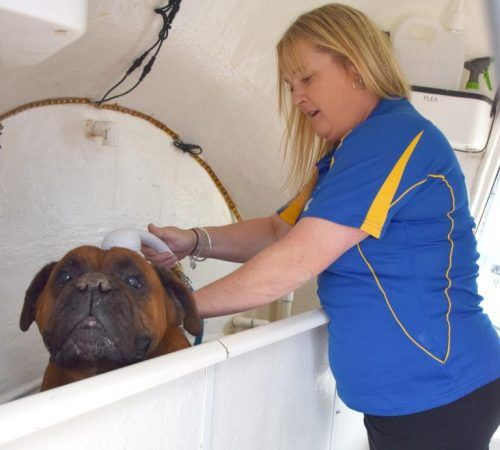 dog groomer washing a dog, dog wash , dog in a hydrobath,dog wash, mobile dog groomer washing a dog